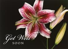 #3823<br>Oriental Lily Get Well